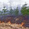В полиции  стартует акция «Берегите лес»