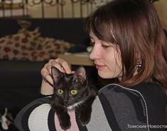 Томские волонтеры провели акцию, посвященную невезучим котам