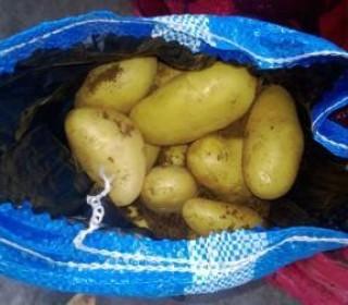 Египетский картофель запретили ввозить в Россию