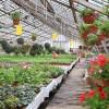 Для садоводов-огородников в Кисловке вырастили цветы, овощи и травы на любой вкус и цвет