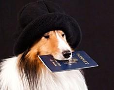 11 тысяч собак в Томской области получили паспорт