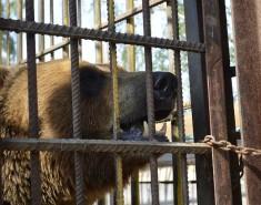 Когда нездоровая любовь к дикой природе оборачивается трагическими последствиями