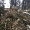 Зеленые легкие Томска разъедают каверны