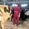Как надоить полторы тонны молока в день