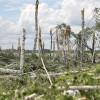 Поправки в Лесной кодекс вступят в силу только в 2019 году