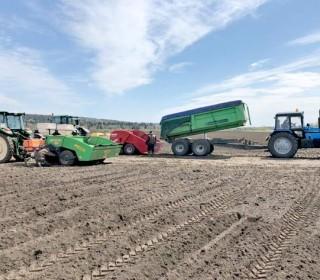 Непогода срывает  сроки посадки картофеля