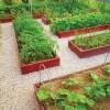 Уход за овощами открытого грунта