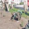 Школьные лесничества возрождаются в районах Томской области