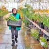 Царство тюльпанов скоро откроет объятия