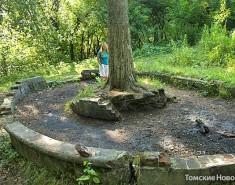 Городские депутаты за деревьями увидели не всё