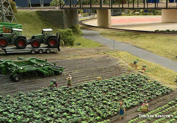 сельское-хозяйство-капуста