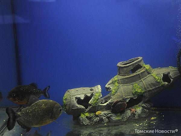 Океанариум в Томске