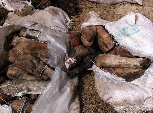 Возле томского водозабора нашли свалку мясных отходов