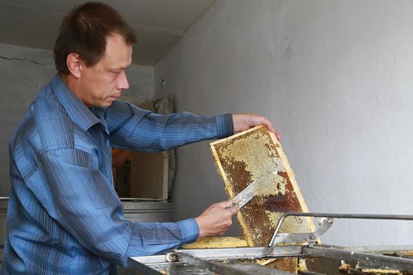 Пчеловод Андрей Паздников распечатывает соты с помощью специального ножа. Горячее лезвие плавит восковые пробки легко и быстро