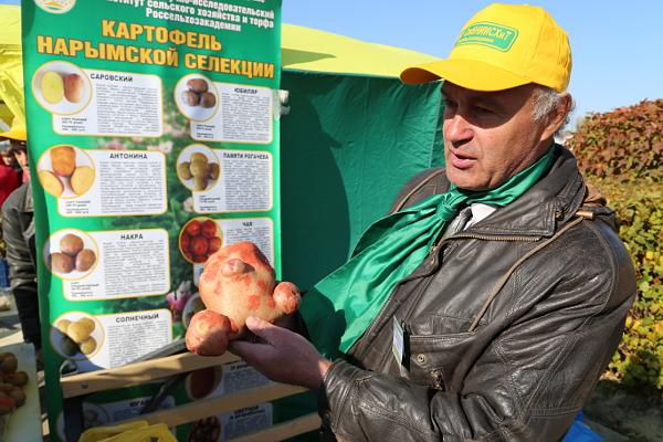 картошка06