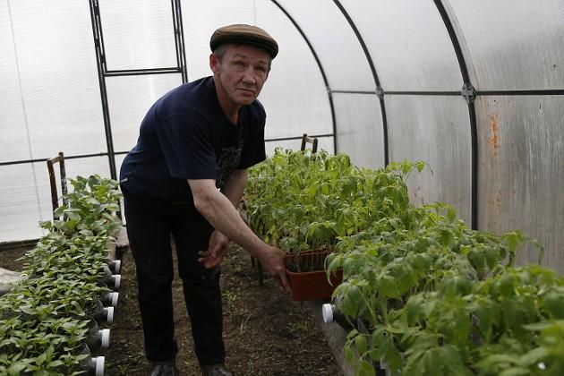 Теплица у Николая – всем теплицам теплица. Сегодня в ней ждут своего часа 400 корней помидоров, 150 – огурцов и столько же перцев. И множество рассады цветов