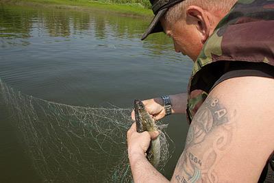 2. Запутавшуюся рыбу выпускают обратно в реку
