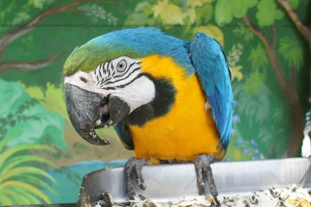 parrot-211481_960_720