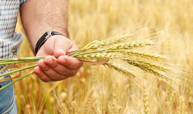 Борис Листов: глобальная цель Россельхозбанка — возрождение деревни